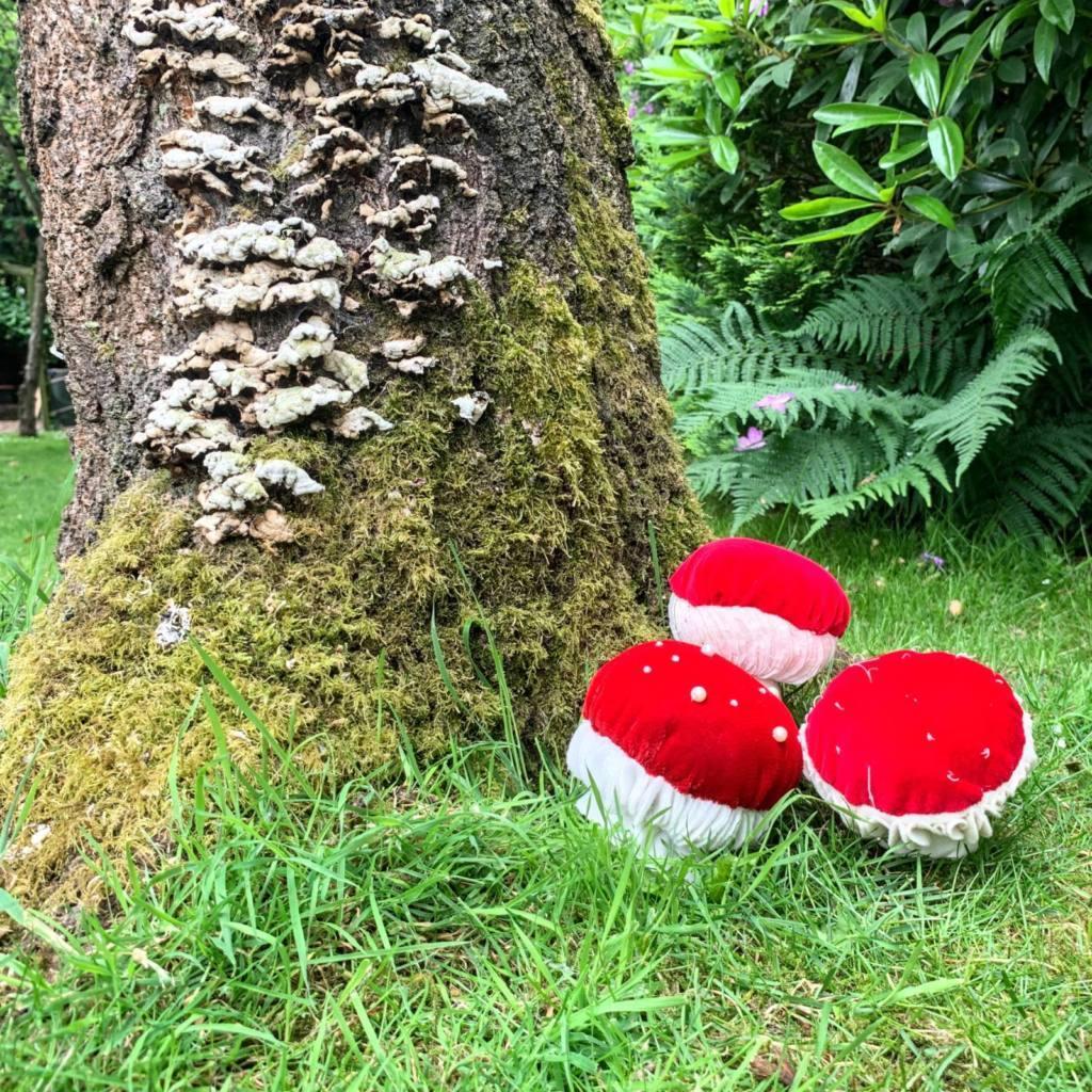 3 red velvet mushrooms at base of tree